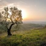 Agriturismo a Spello, storia, cultura e natura