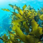 Le alghe Klamath: perchè sono un alleato per il nostro benessere