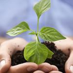 Imprese agricole e norme sulla tenuta del registro di carico scarico rifiuti