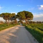 Fiumicino: un assaggio di Italia a pochi chilometri dalla Città Eterna.